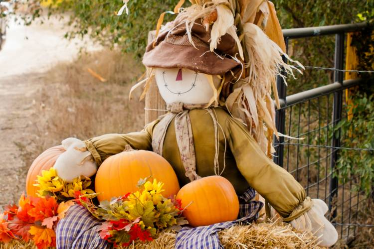 A cute scarecrow sits on a hay bale surrounded by pumpkins